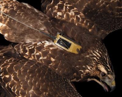 Image of backpack bird.