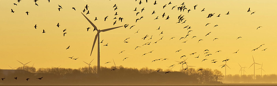 Image of wind farm with birds