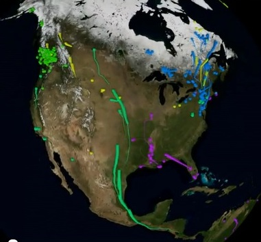 bird migrations from Movebank.org