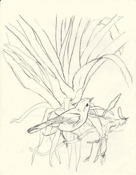 Sketch for International Migratory Bird Day 2013