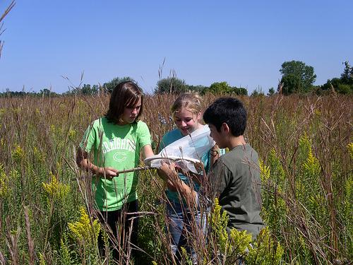 students study butterflies in the field