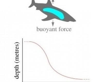 Figure 1 from Del Raye et al. (2013)