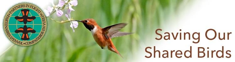 Rufous hummingbird with Partner's in Flight logo