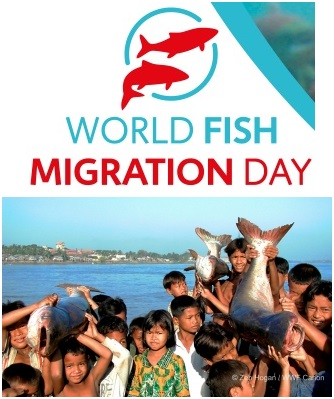 World Fish Migration Day 2014