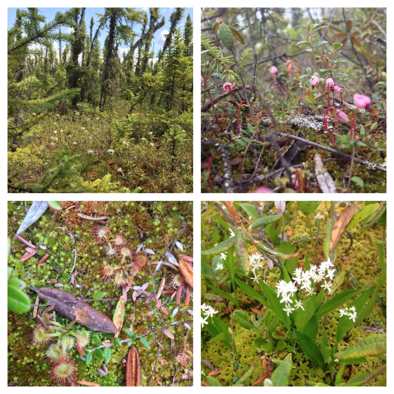 Flora in the bogs.