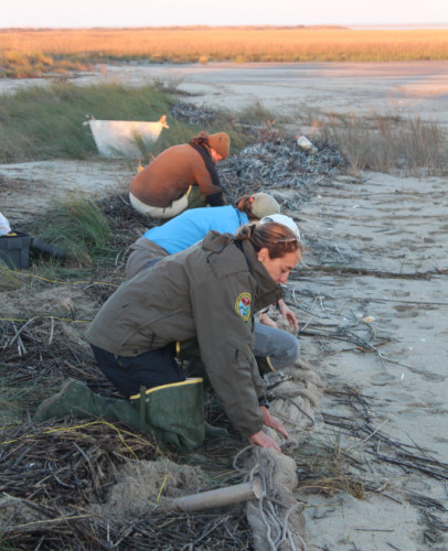Setting the cannon net on Lighthouse Island. By Erin Weeks/SC DNR