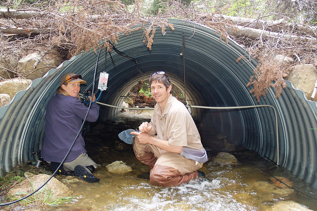 Helen Neville (left) and Doug Peterson (right) installing pass-through PIT tag detection antenna at a remediated culvert on a tributary to East Fork Lolo Creek, MT. USFWS.
