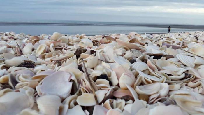 The beach of shells, Puerto San Antonio Este. Photo by Sofia Capasso