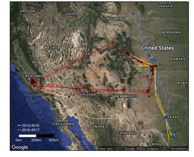 Mountain Plover migration routes. Solid lines depict 2015-2016 migrations and dashed line depict 2016-2017 migrations. Routes in red are from the same individual.
