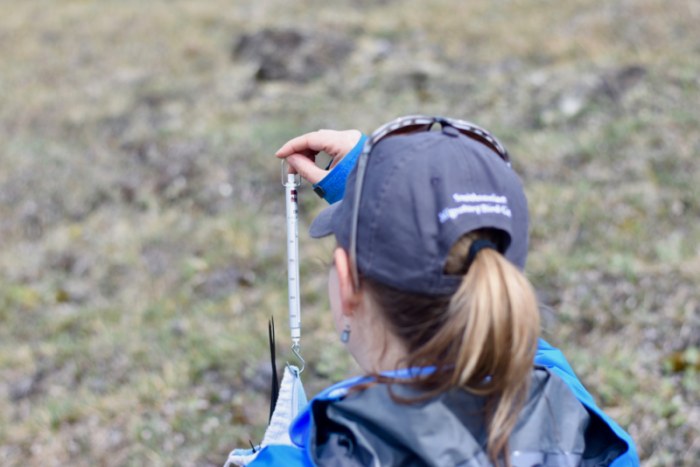 Weighing a Long-tailed Jaeger with a Pesola scale…see the tail streamers sticking up out of the weight bag.