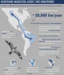 CONI Infographic